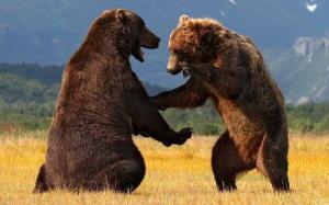bearswrestling